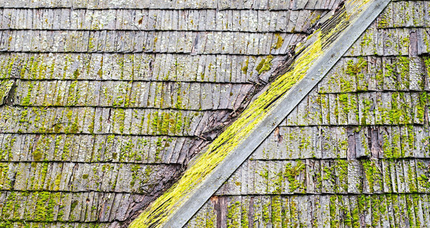 Remove Algae from Your Roof