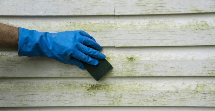 what is the green stuff on siding